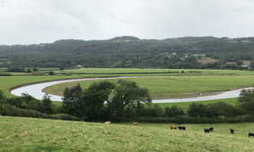 Towy Meanders